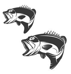 Set Of Bass Fish Icons Isolated On White Vector