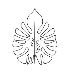 Big leaves of tropical monstera plant isolated on vector