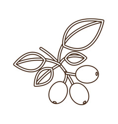 Coffee tree icon image vector