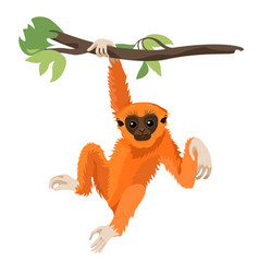 Gibbon primate mammal monkey in wildlife vector