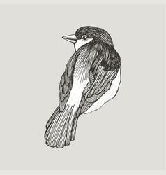 graphic sparrow hand drawn bird on retro vector image