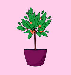homemade tangerine tree in a pot vector image