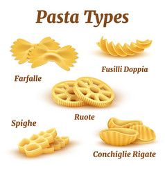 realistic traditional italian pasta types vector image