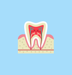 Tooth anatomy flat icon vector