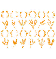 Wheat or barley ears harvest wheat grain growth vector