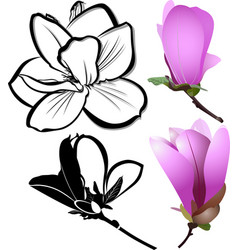 flowers magnolia vector image
