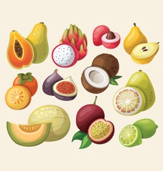 set of exotic fruit vector image