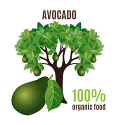 Avocado tree isolated with fruit below 100 vector