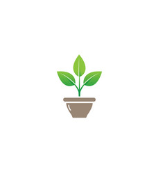 creative flower plant bowl vase logo design symbol vector image