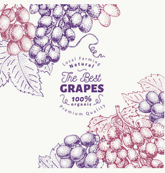 Grape berry design template hand drawn vector
