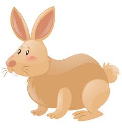 Rabbit with brown fur vector