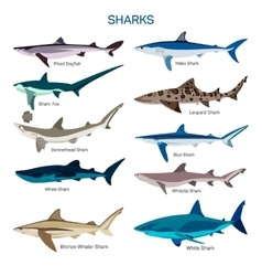 Shark fish set in flat style design vector image