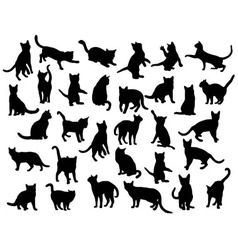 Activity Cat Silhouettes vector image