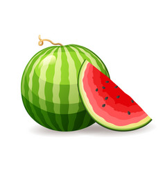 Fresh ripe watermelon on white background vector