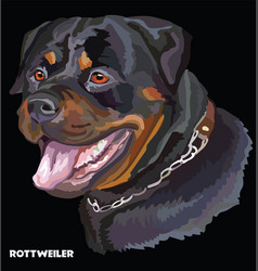 Rottweiler colorful portrait vector