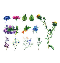 Set of watercolor drawing wild flowers vector