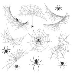 Spider with cobweb vector