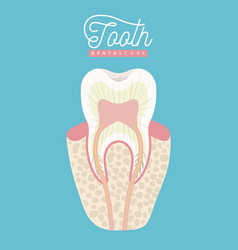 Tooth anatomy dental care on color poster vector