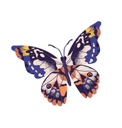 Tropical elegant butterfly with colorful wings and vector