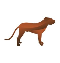 wild dog animal jungle pet logo silhouette of vector image vector image