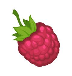 sweet ripe raspberry fruit isolated cartoon vector image