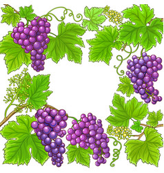 grapes branches frame on white background vector image