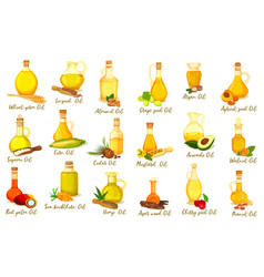 Set isolated nut oil bottles organic drink vector