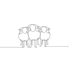 Single continuous line drawing three sheeps vector