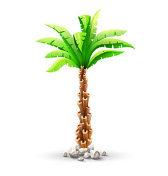 tropical coconut palm tree vector image