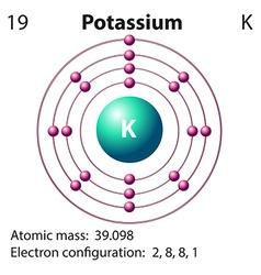 Diagram representation of the element potassium vector image vector image