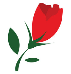 a beautiful red tulip flower or color vector image