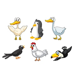 Different kinds birds vector