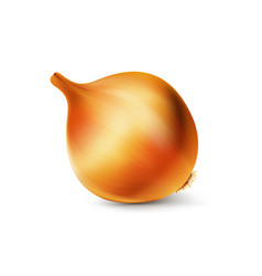 sweet onion in a realistic style vector image