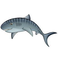 Tiger shark vector image vector image