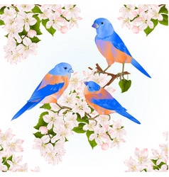 bluebirds thrush small songbirdons on an apple vector image