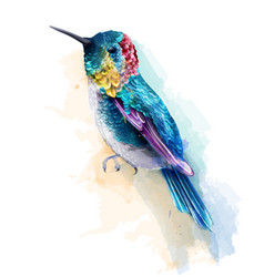 Colorful humming bird watercolor tropic vector