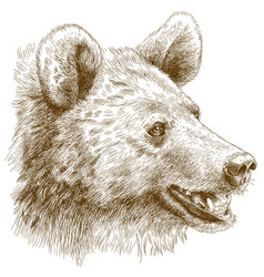 Engraving of bear head vector