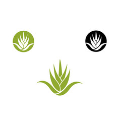 Agave plant icon vector