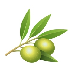 Isolated olives branch vector