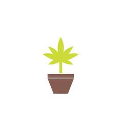 marijuana plant in pot icon flat style vector image