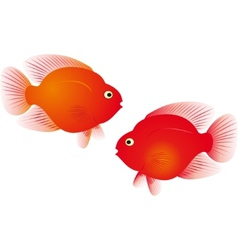 parrot fish vector image