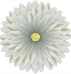 Tender chrysanthemum floral round realistic vector