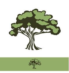 big oak tree vector image vector image