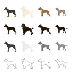 doberman dog poodle boxer breed pit bull dog vector image