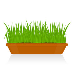 Green grass in clay pot isolated vector