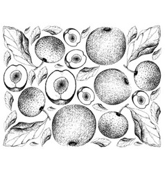 Hand drawn background of davidson plums and chines vector