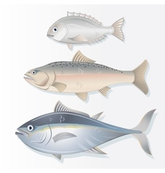 Set of Edible Fishes Dorado Salmon and Tuna vector