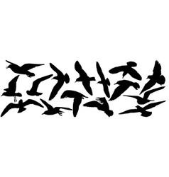 Silhouettes seagull birds set vector