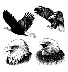 set of eagle doodle hand drawn vector image vector image
