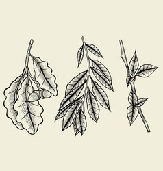 sketch spring branches vector image